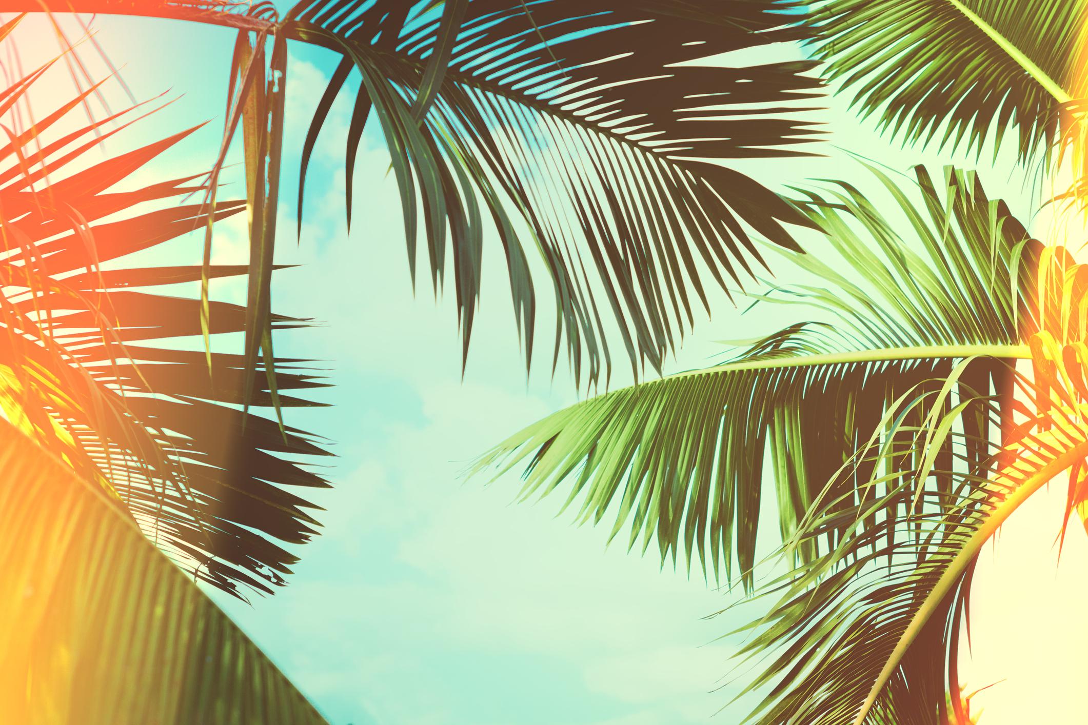 Palms_iStock-858987092.jpg