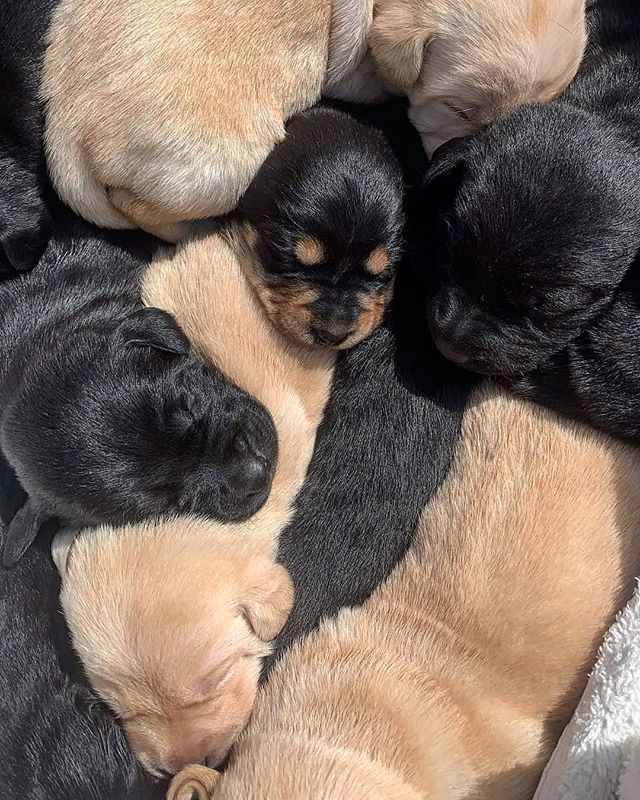 The next generation of truffle pups have arrived!