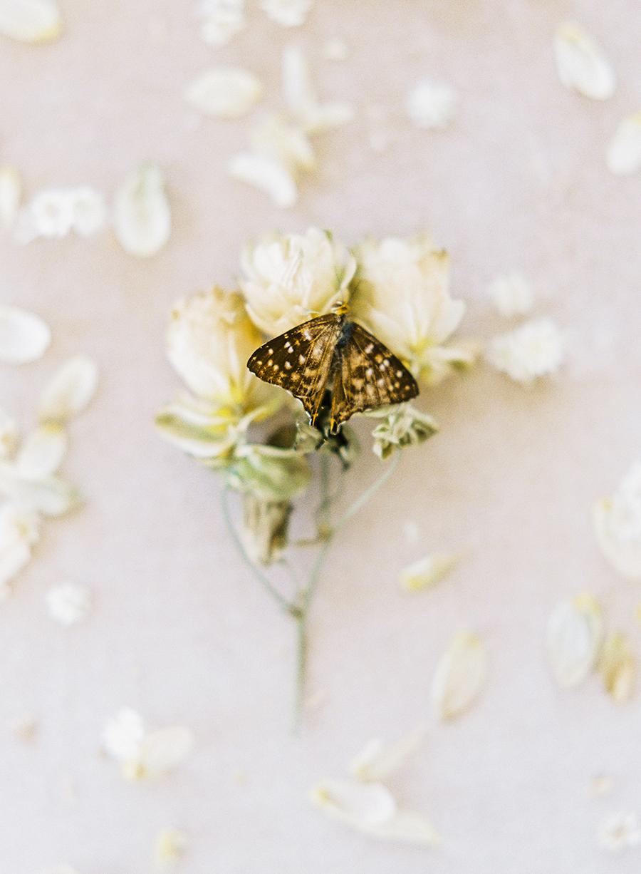 OTOGRAPHY_SHOP GOSSAMER_BUTTERFLY_LOS ANGELES WEDDING INSPIRATION-127.jpg