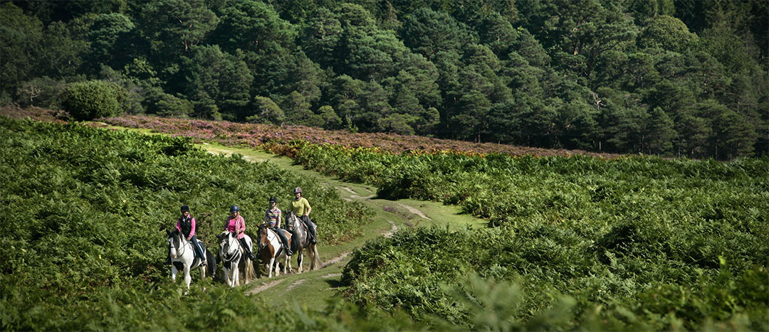 Experience the rich history of the New Forest
