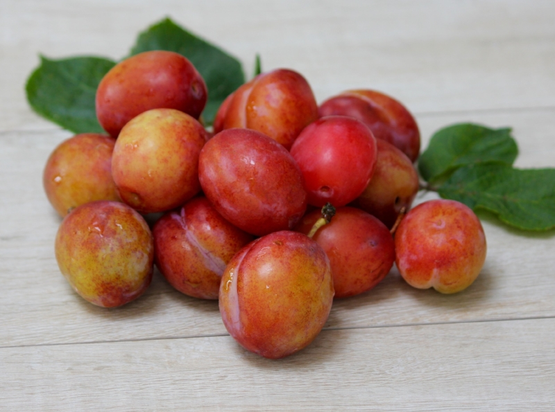 Freshly picked plums