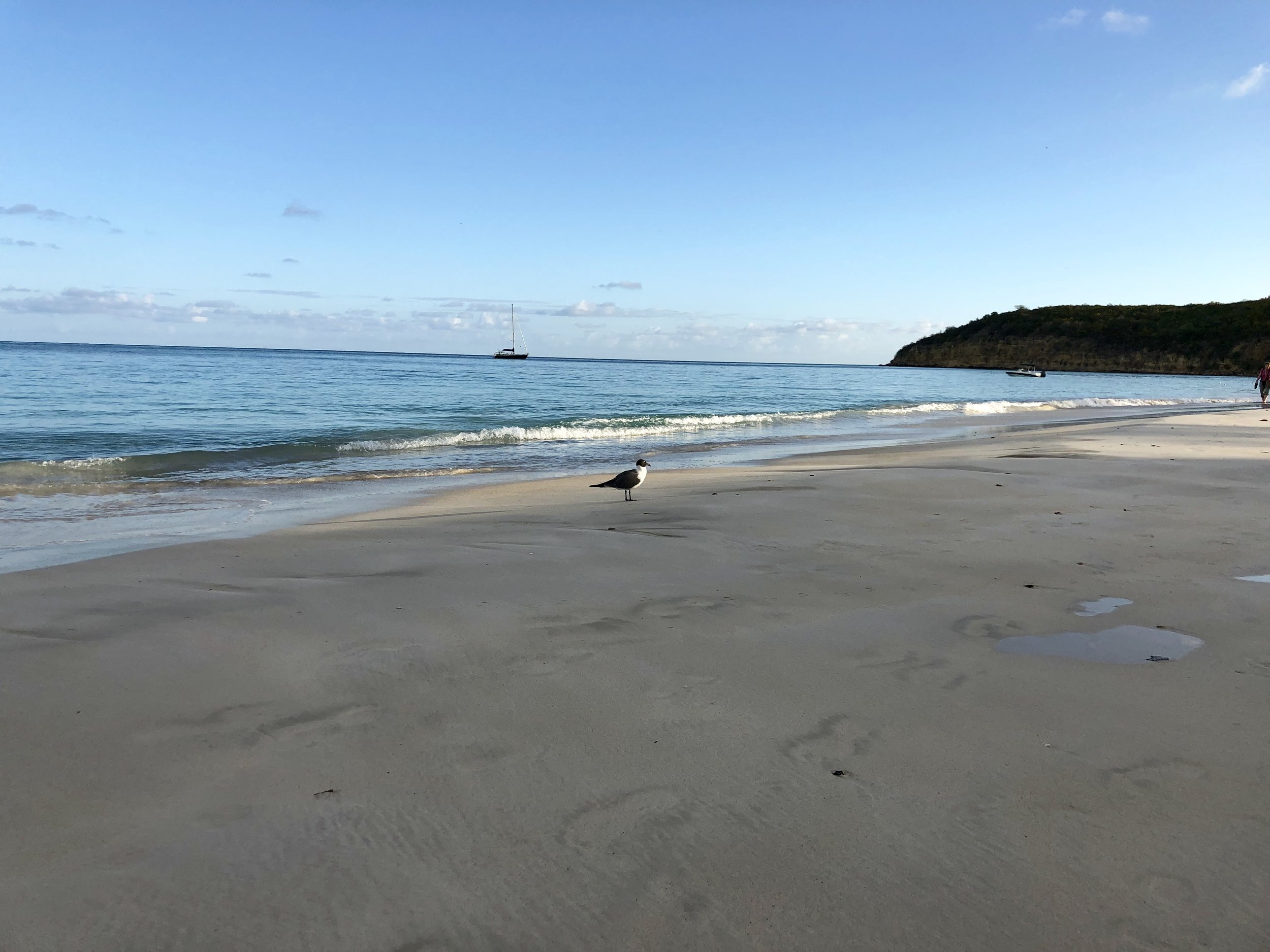 Walking on a Beautiful Beach - It's Good For Your Microbes Too!