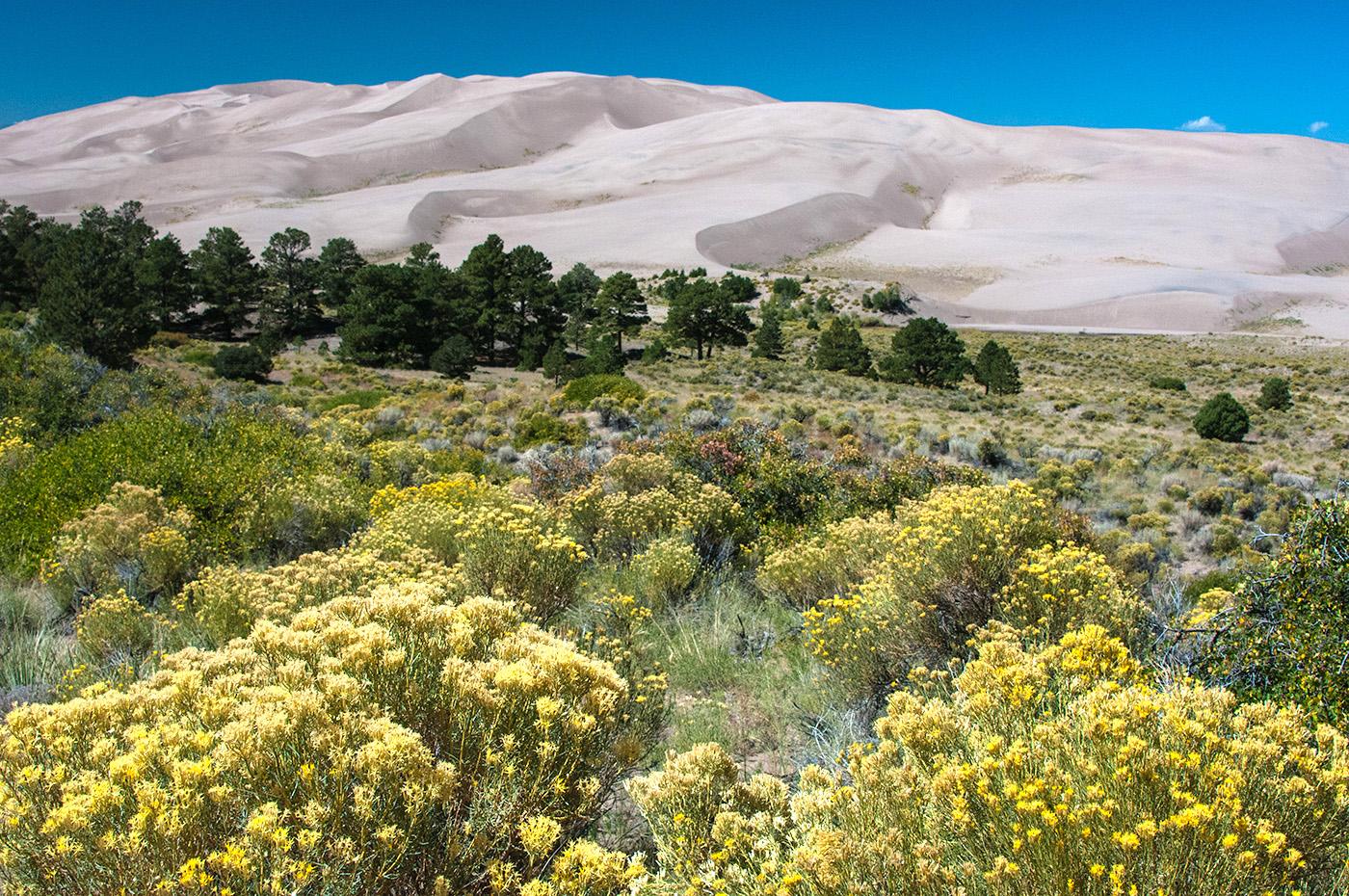 Distant Dunes.jpg