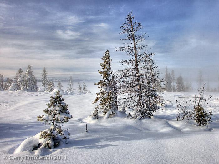 Pines_at_Yellowstone_Lake_2.jpg