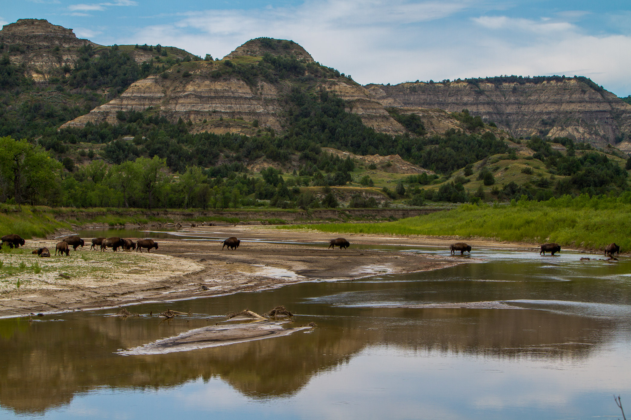 River Crossing - Theodore Roosevelt National Park