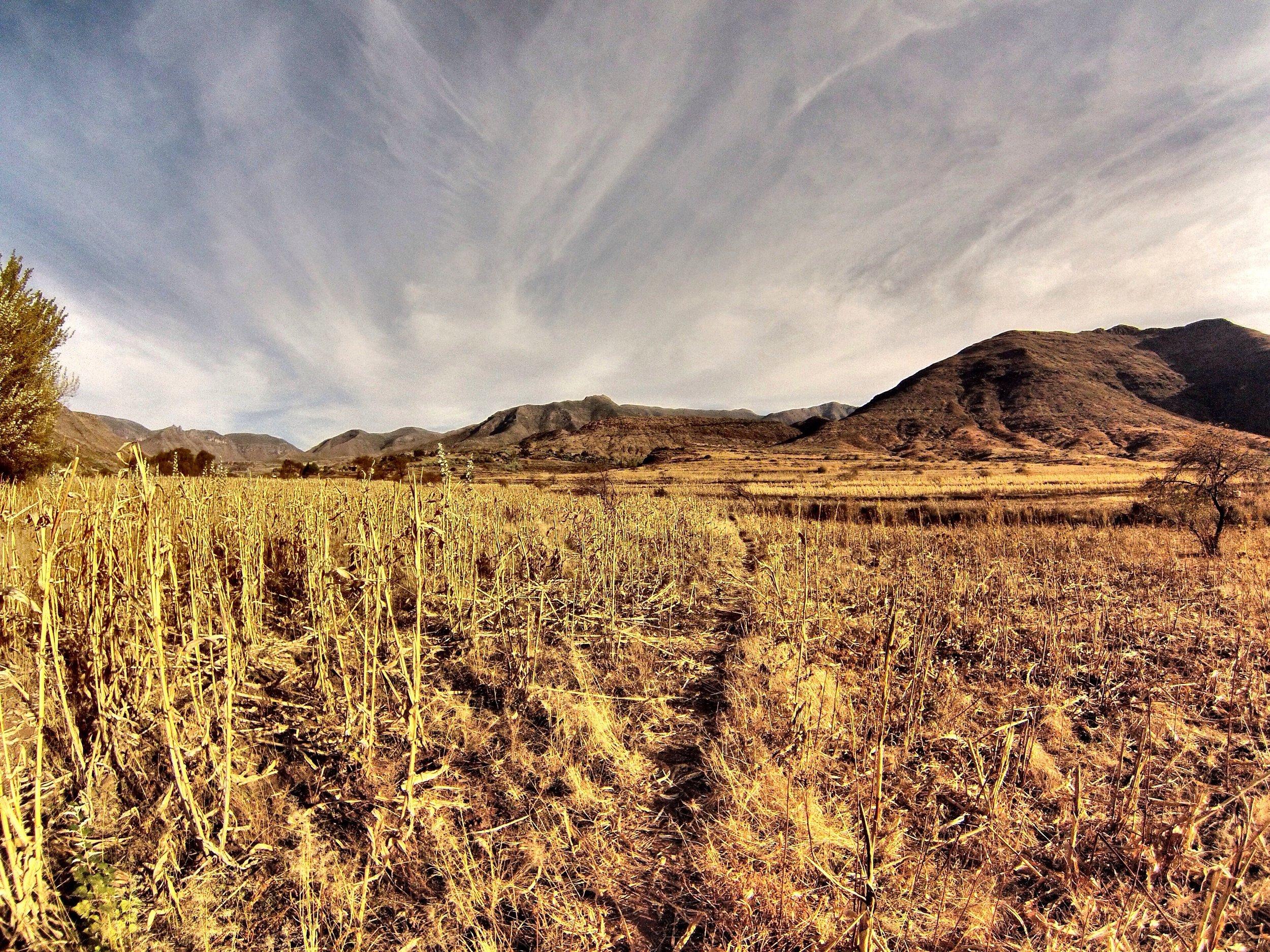The fields near Pulane in harvest