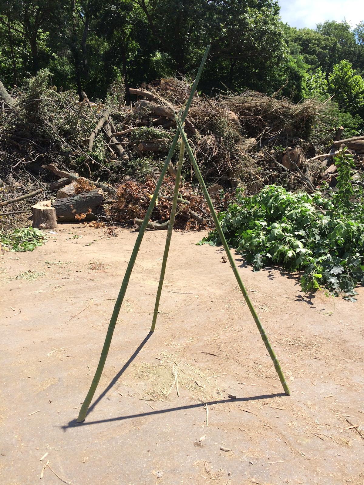 TreeAlphaStudy.Bamboo3Legs2Shadows.July2015.jpg