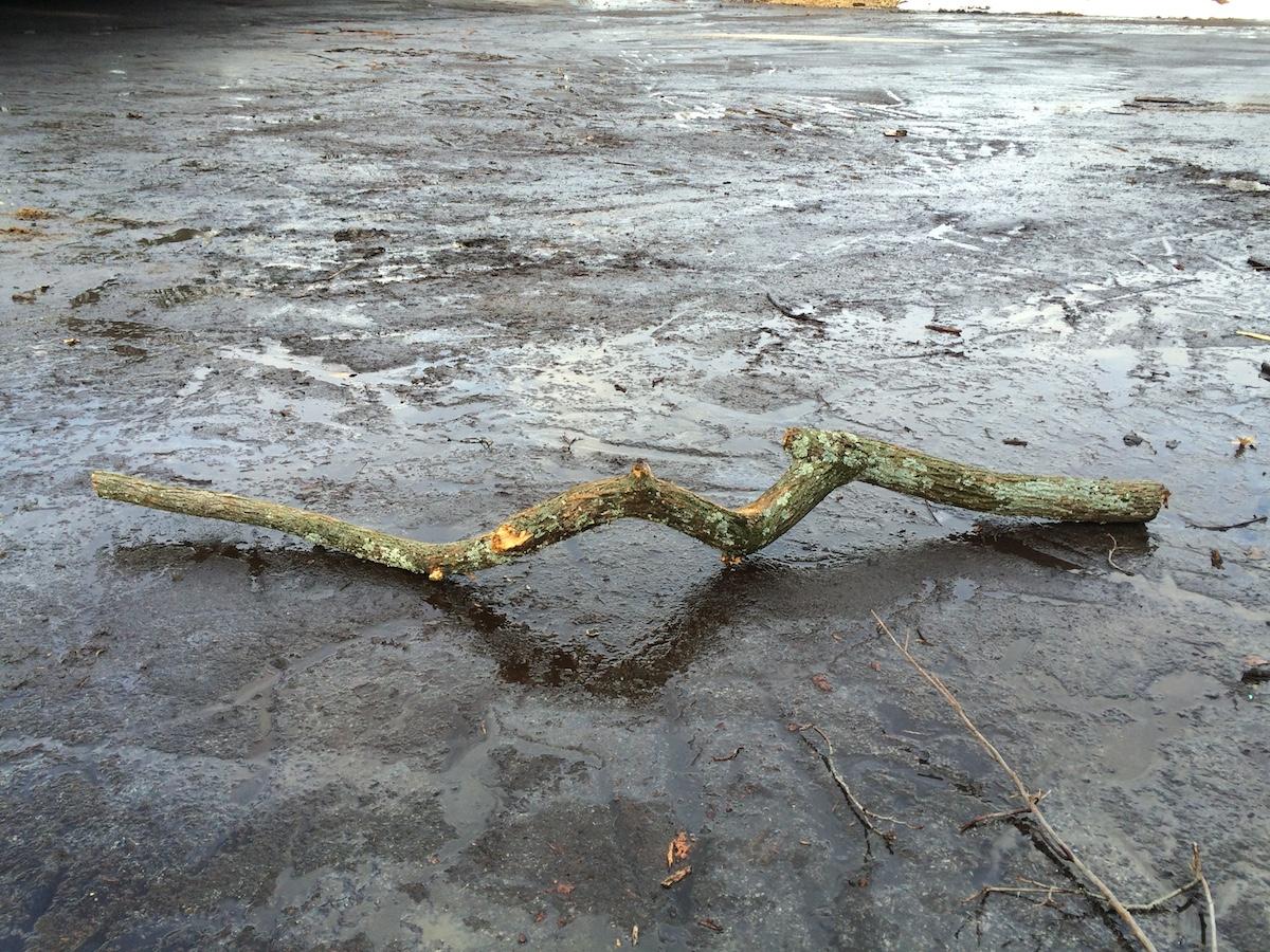 TreeAlphaStudy.January2015.JPG