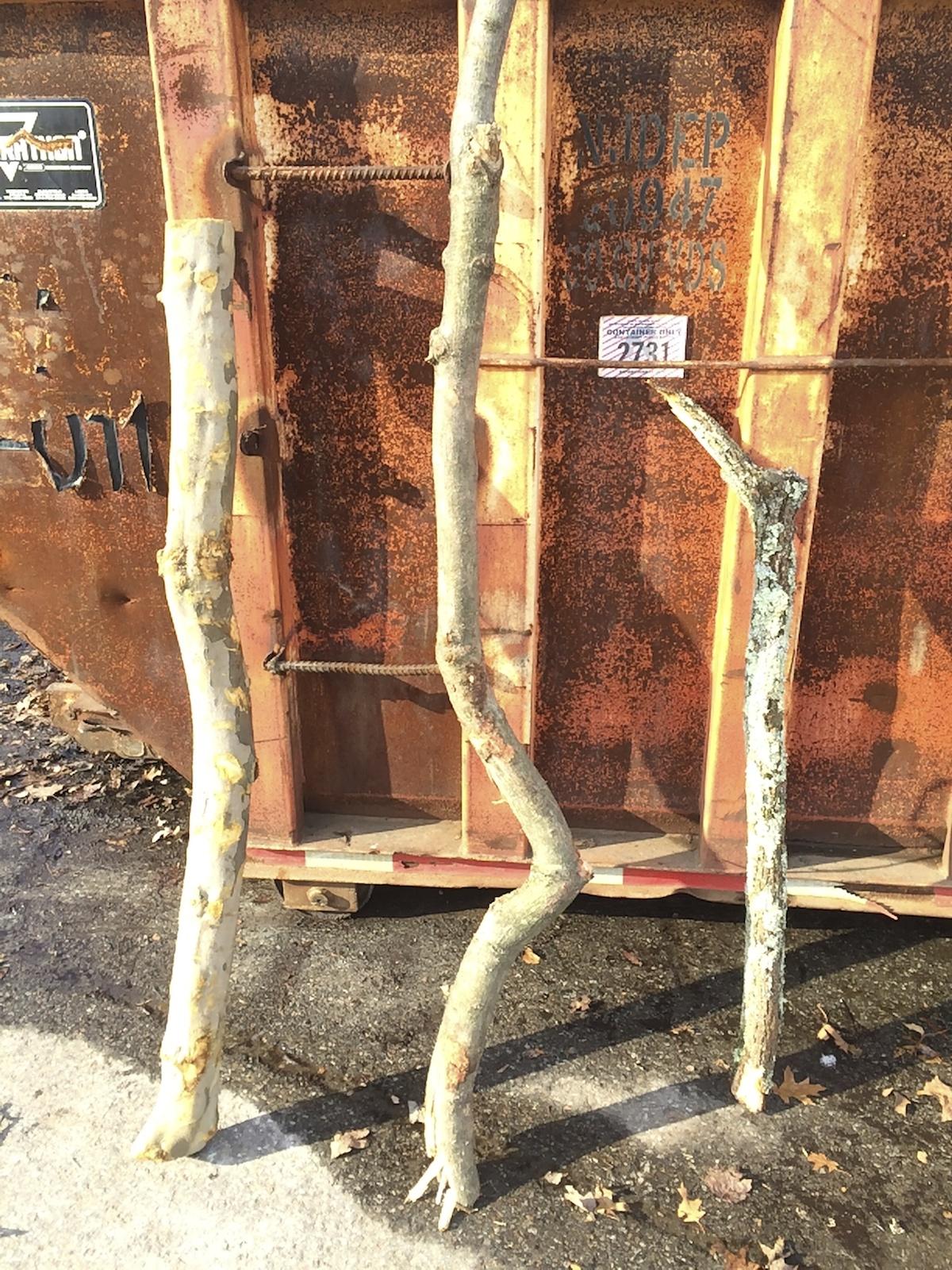 TreeAlphaStudy.OrangeDumpster.January2015jpg.jpg