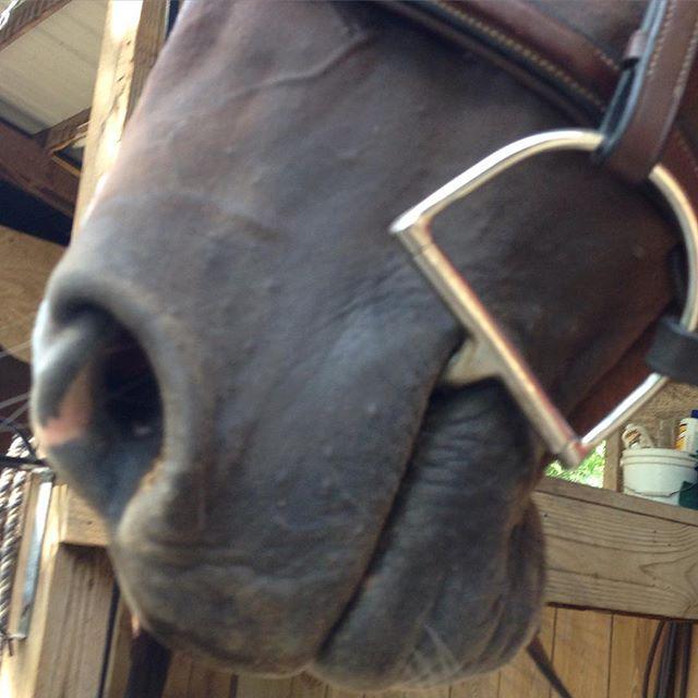 Ready.  #equestrianlife #horse #equestrian #dressage