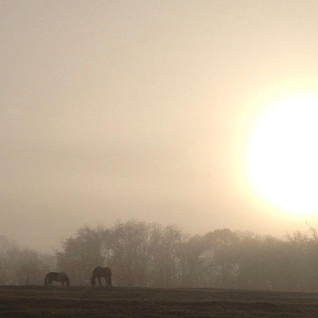 Morning mist. #equestrian #equestrianlife #farmlife #nofilter