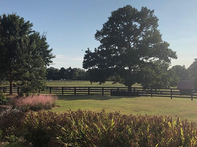 Fall colors are beginning. This is my favorite time of year. This view to the grass jump arena is stunning.