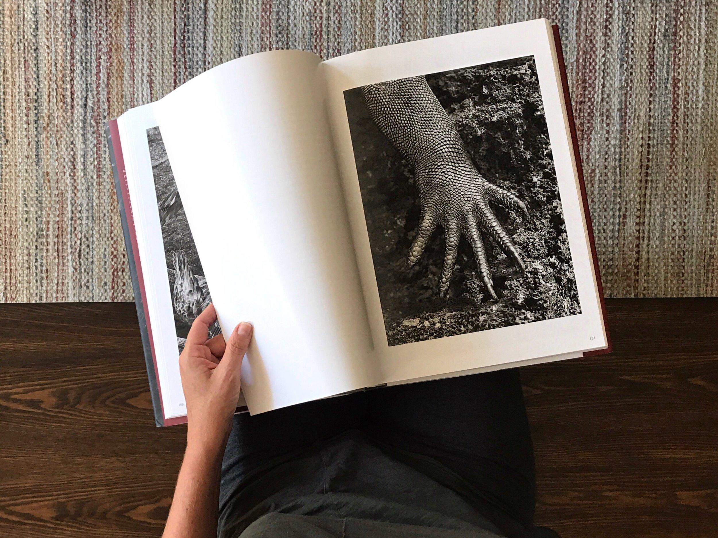 "Looking through Sabastião Salgado's book ""Genesis"". A marine iguana from Galápagos; one of my favorite photographs."