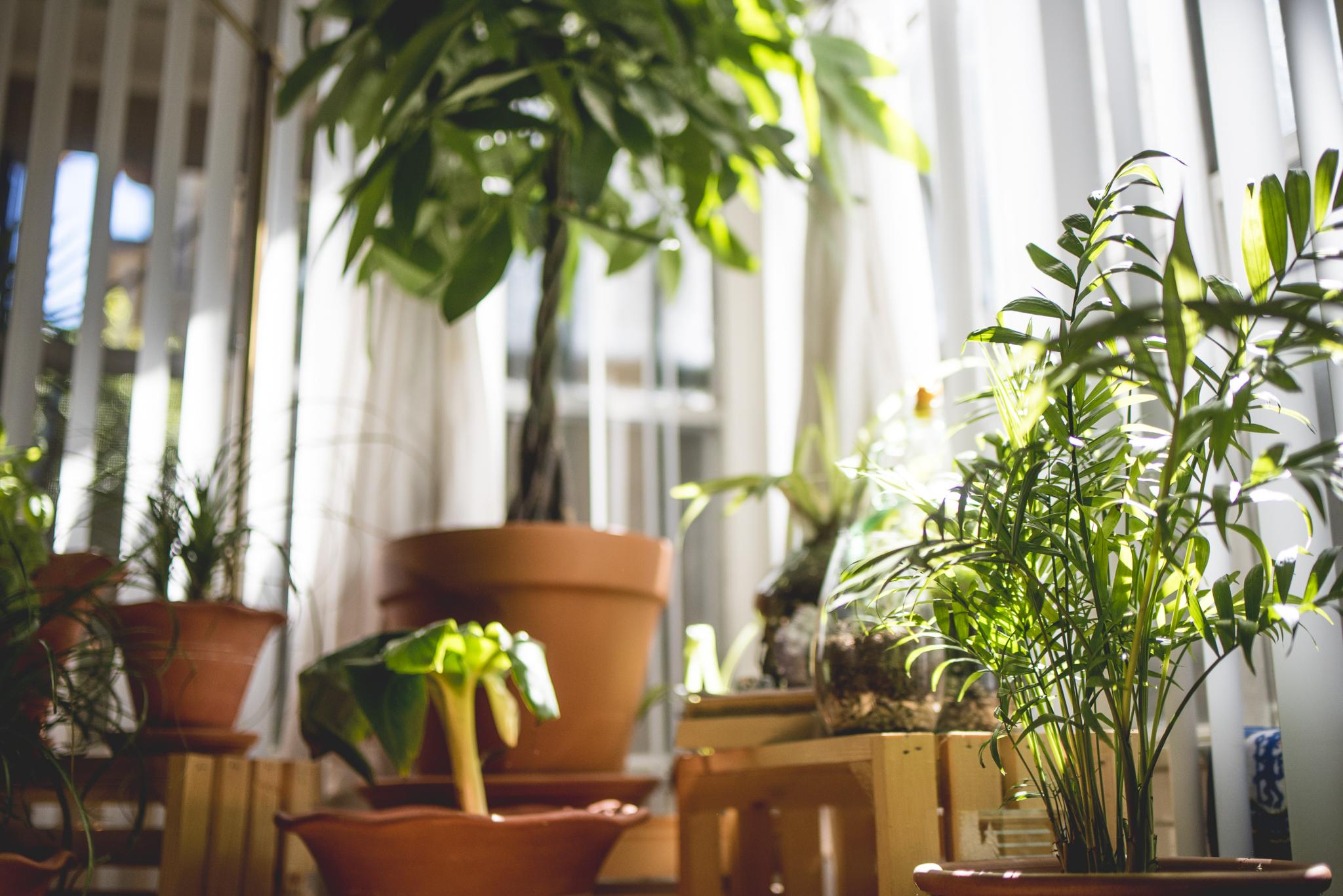 plantblog-13.jpg