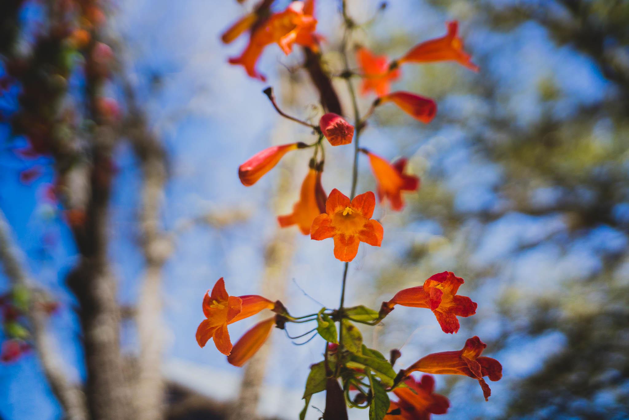 ladybirdcenter-1.jpg