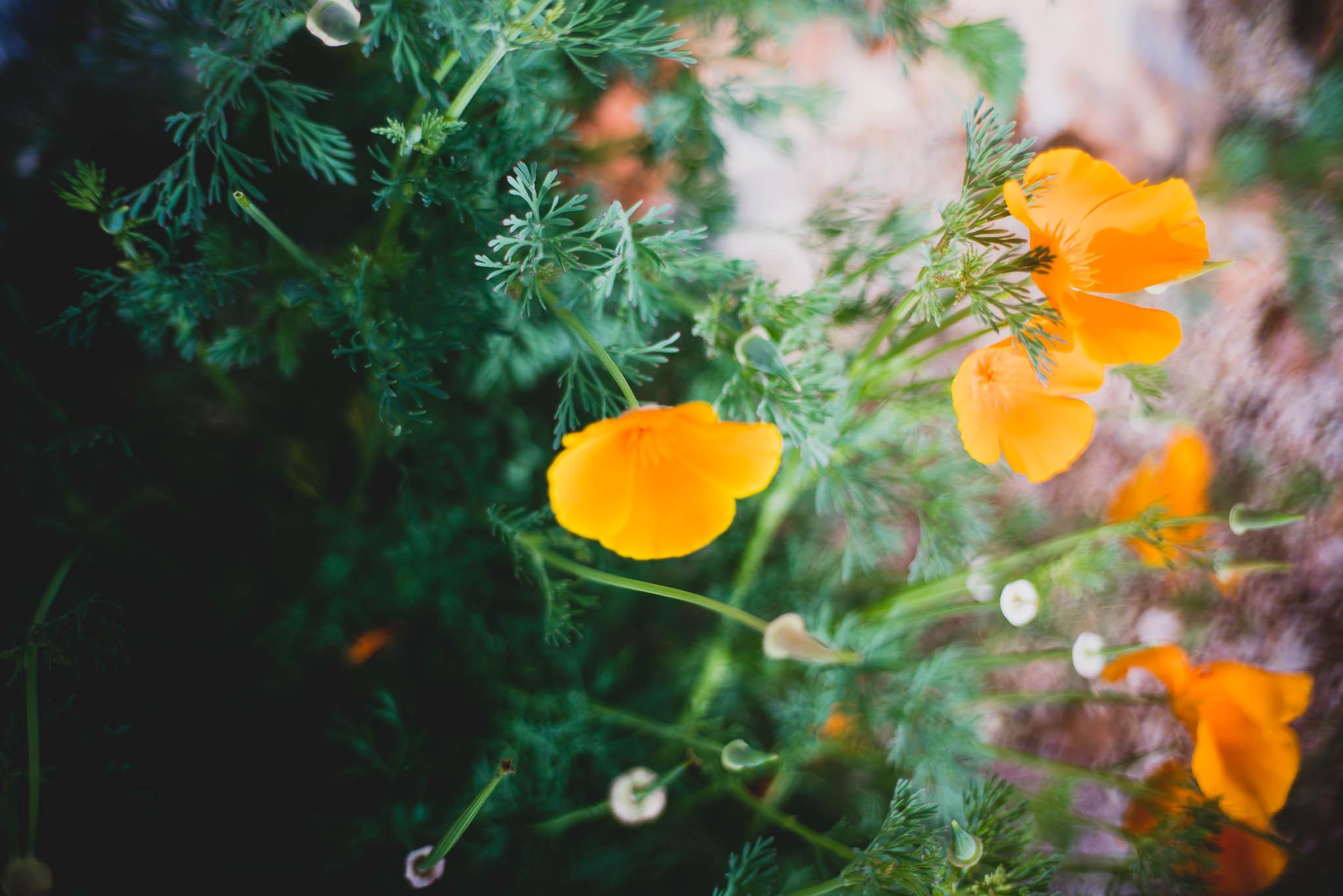 ladybirdcenter-25.jpg