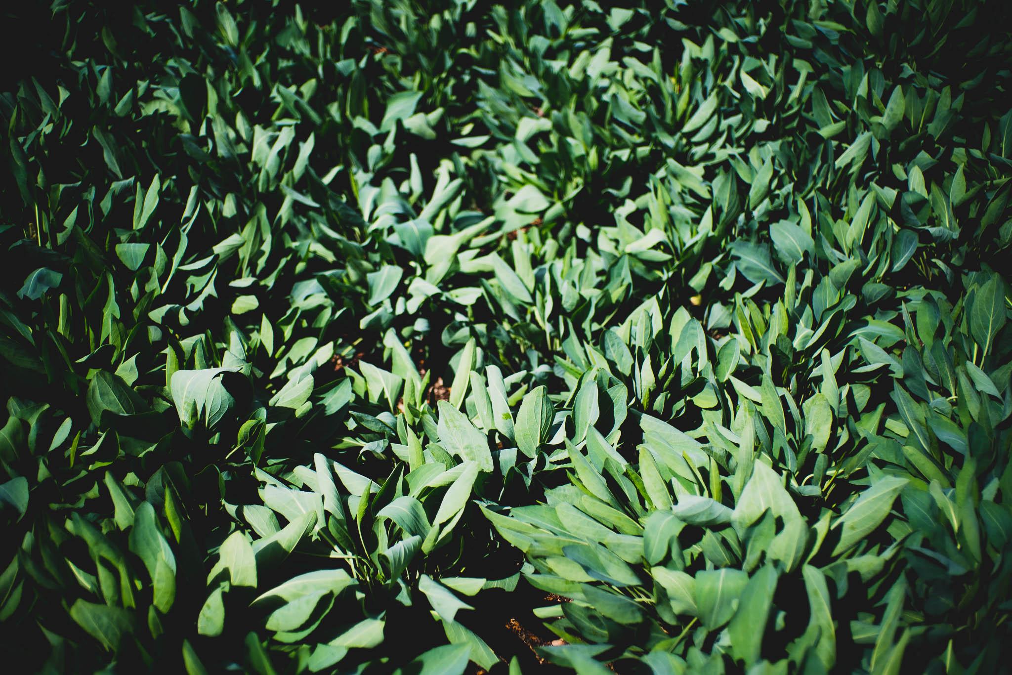 ladybirdcenter-39.jpg
