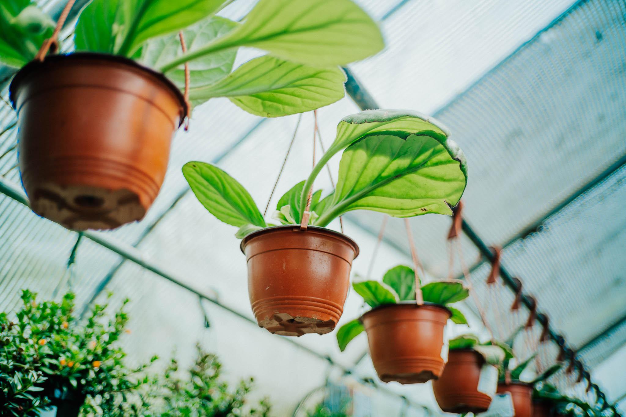 plants-7.jpg