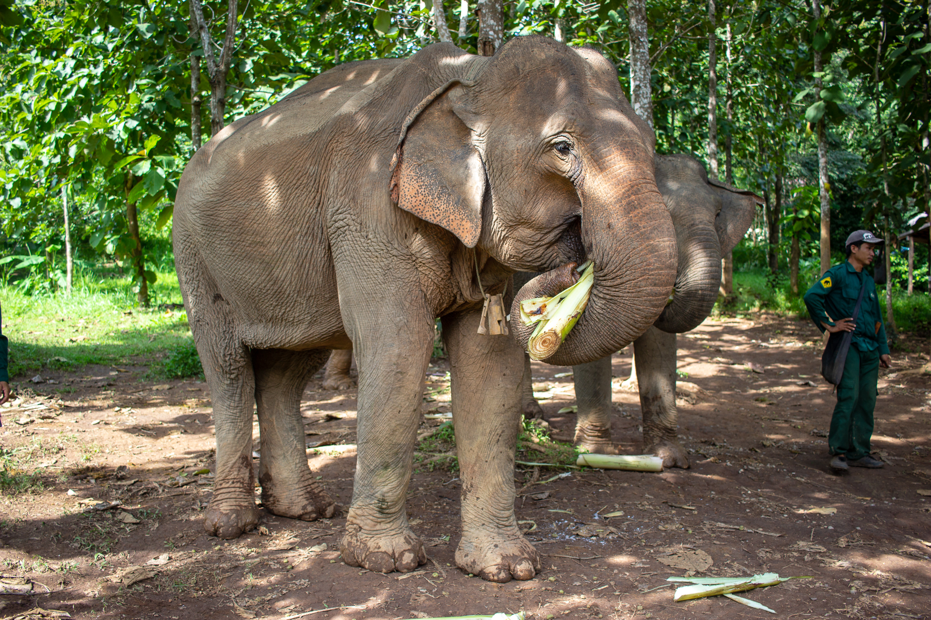 ElephantConservationCentre (12 of 38).jpg