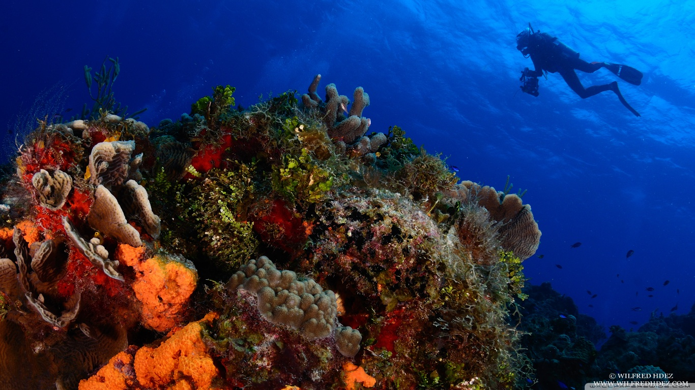 scuba_diving-wallpaper-1366x768.jpg