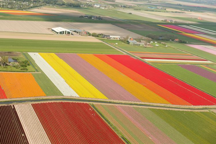 THE NETHERLANDS & BRUGES, BELGIUM  //APR 14 –23, 2015
