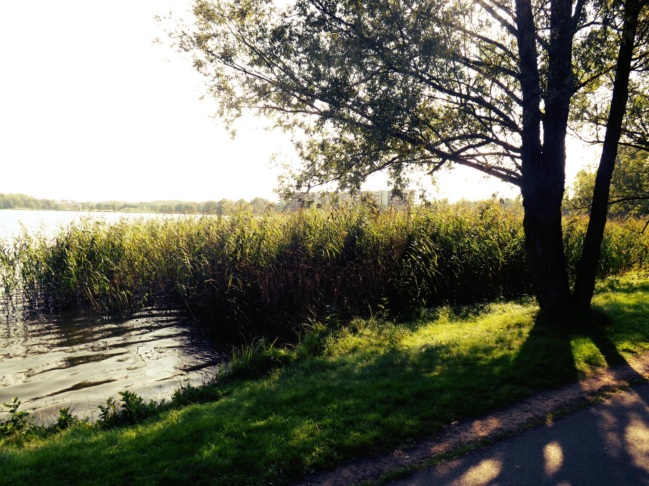 Sunny View of the Växjö Lake   Tall Girl Meets World