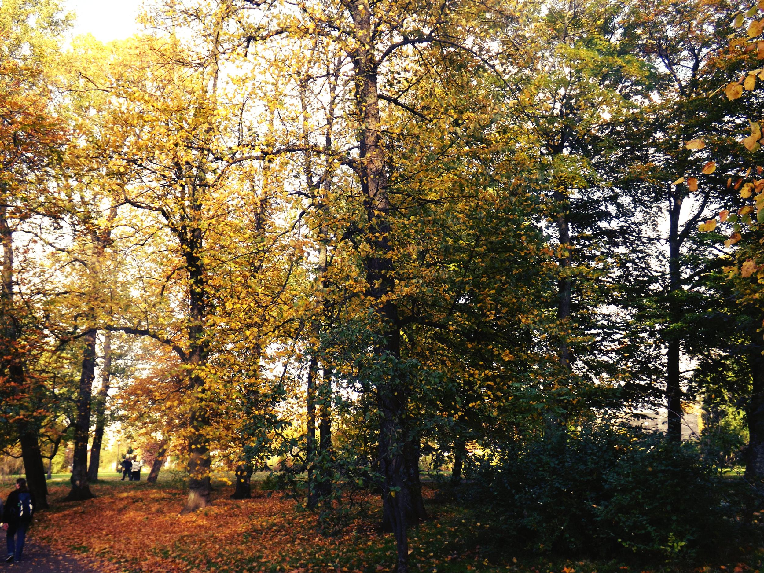 Fall in Gothenburg.jpg