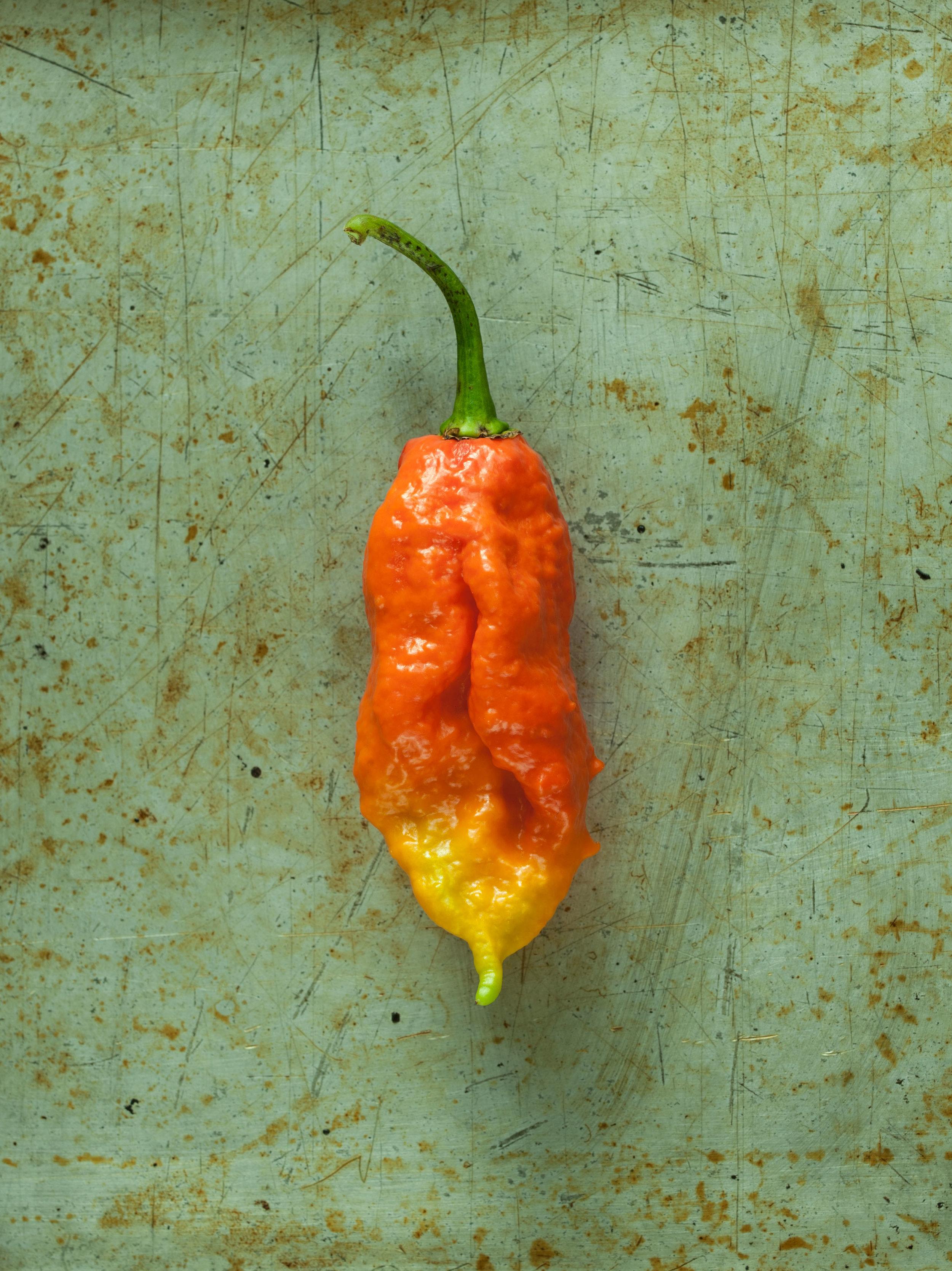 peppers_2016-10-02_00025_1.jpg