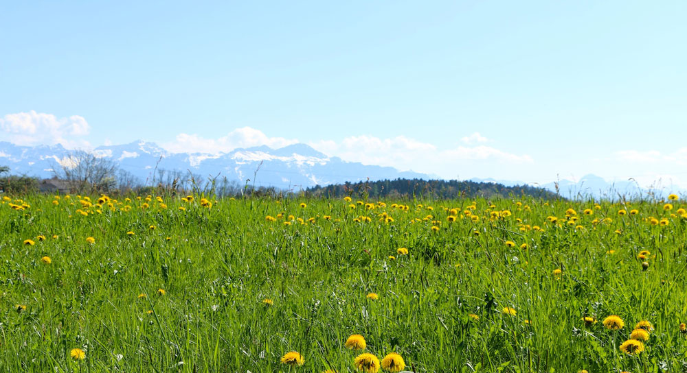 The Clear Way Spring Retreat - Lausanne Switzerland