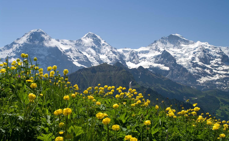 suisse-alps.jpg