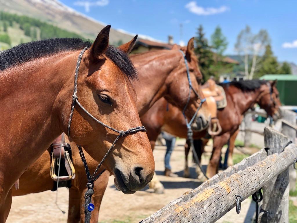 """""""Es war einfach unglaublich schön: - Pferd, Natur, Yoga und alle Ruhe der Welt. Diese Berge haben es in sich. Mérci! Namasté."""""""