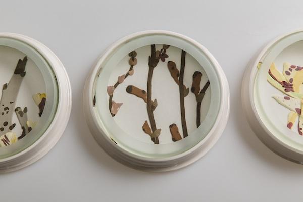 Herbarium Dish - Muehlenbeckia copy.jpg