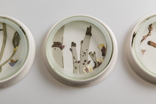 Herbarium Dishes - Bossiaea copy.jpg