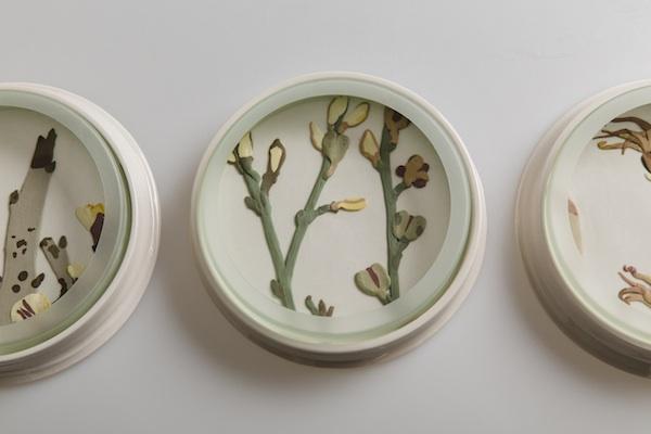 Herbarium dishes - Lepidium copy.jpg