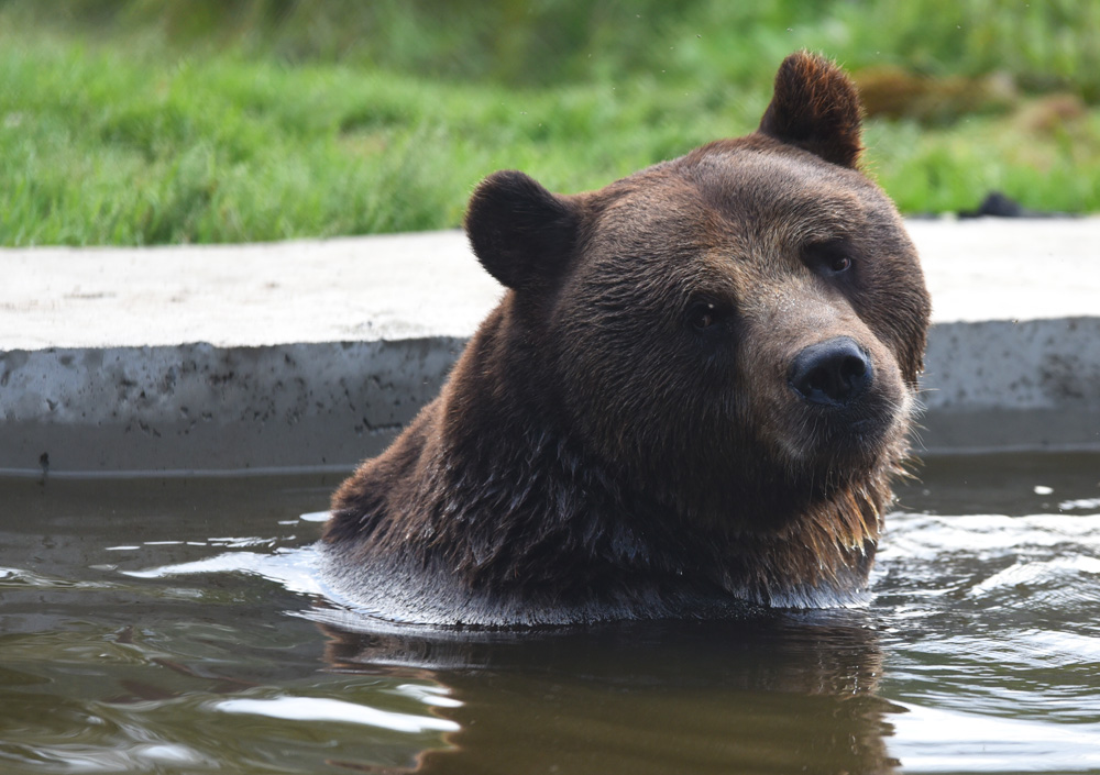 Juuso the Bear taking a bath.jpg