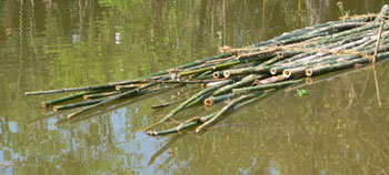 Bamboo are submerged for 6-10 weeks