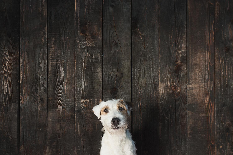 TEČAJI   V Šoli za družinske pse PRIDEN.SI prirejamo začetne tečaje vzgoje in šolanja za mlade pse in nadaljevalne tečaje za odrasle pse.   Več →