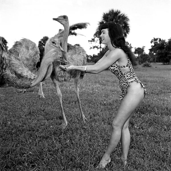 jungle bettie ostrich.jpg