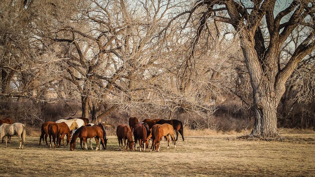 horses br.jpg