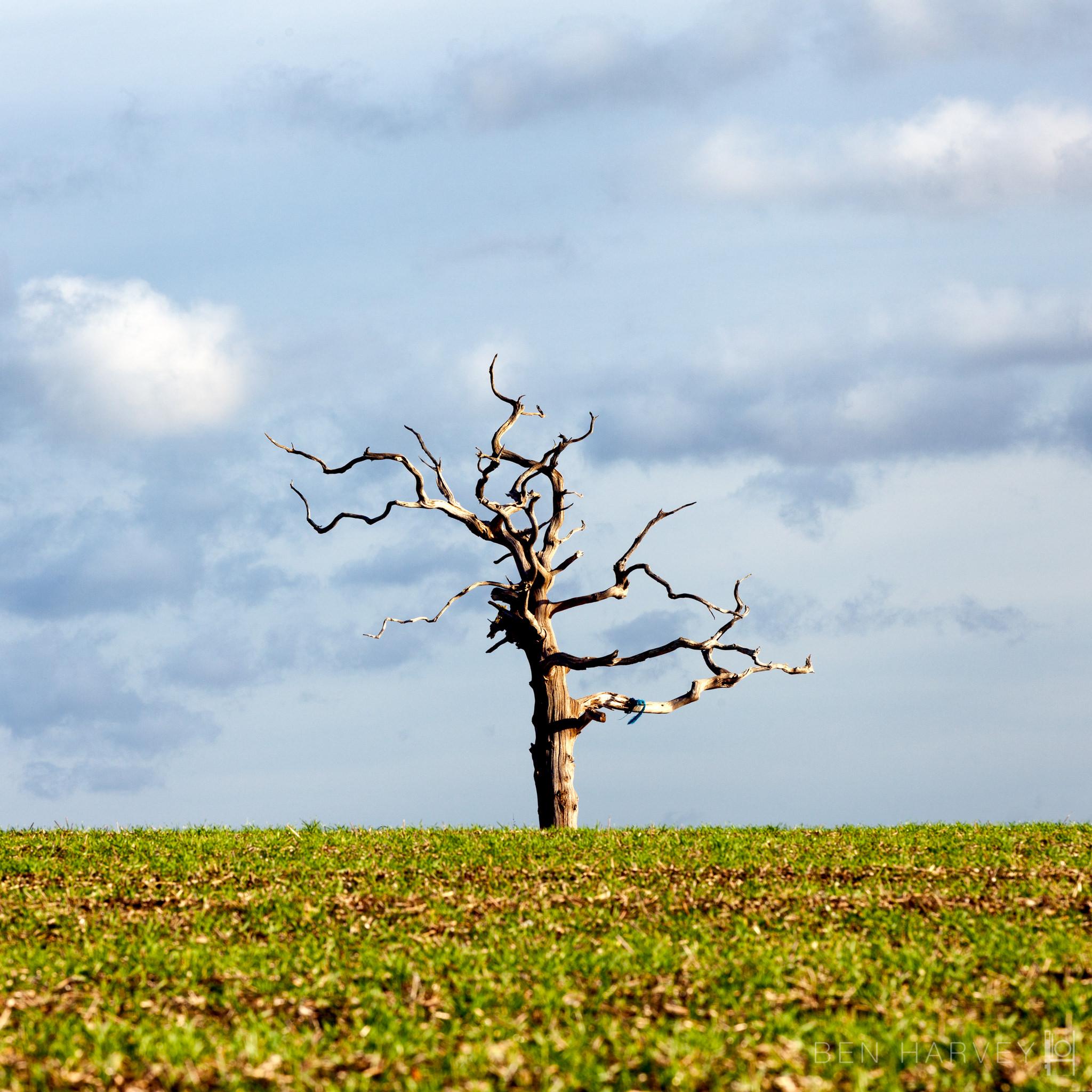 Tarrant Valley Lone Tree