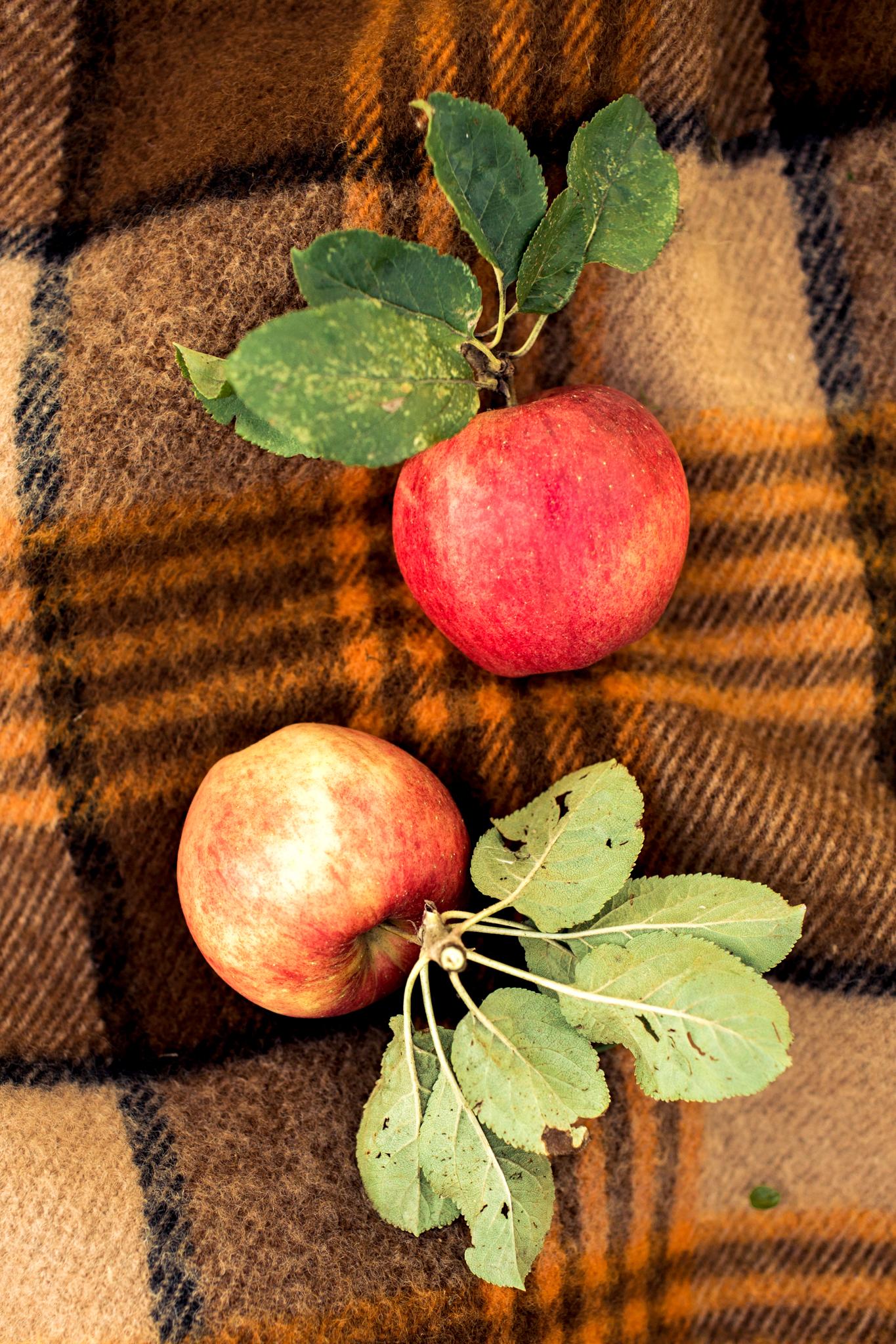 Fruittuin-van-West-Fotoshoot.jpg