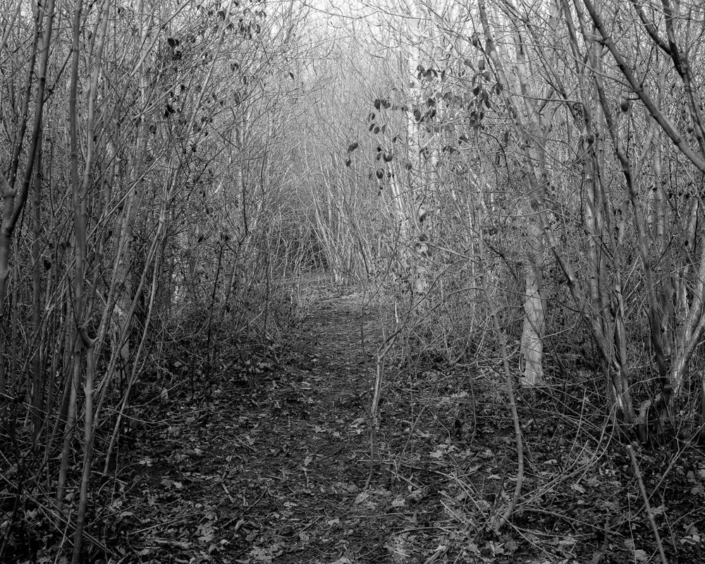 The Trail017.jpg