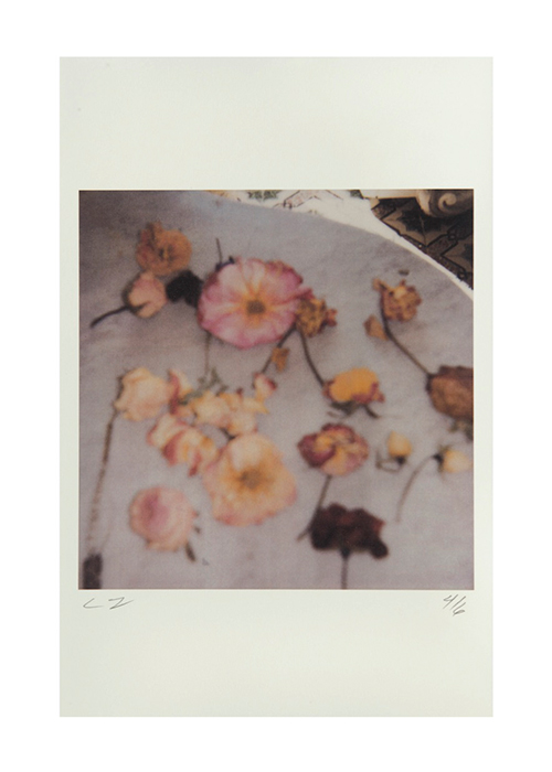 Cy Twombly  Light Flowers, Gaeta,  2008 Color dry print 17 x 11 inches  (43.2 x 27.9 cm)  © Nicola Del Roscio Foundation