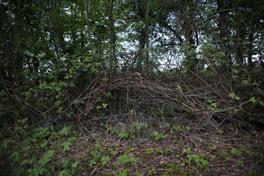 Hedgerow Vernacular - A Natural History of Watership Down