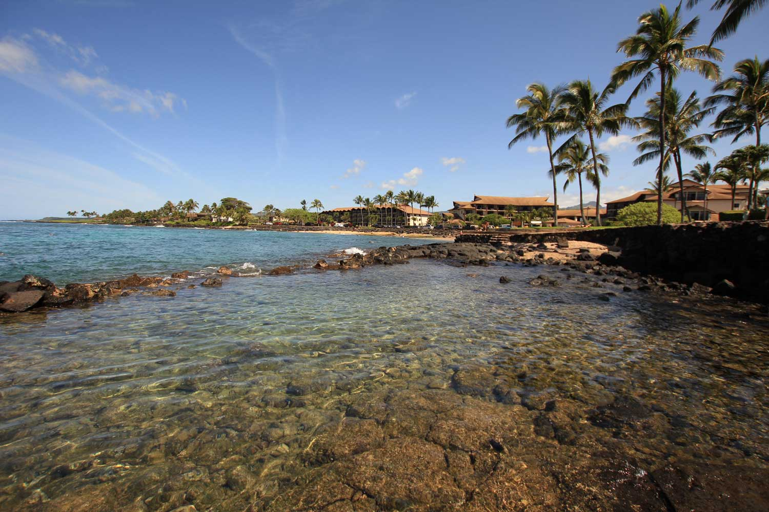 Pacific Real Estate Services - Reef