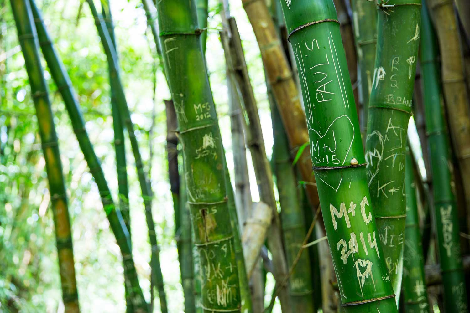Pacific Real Estate Services - Bamboo