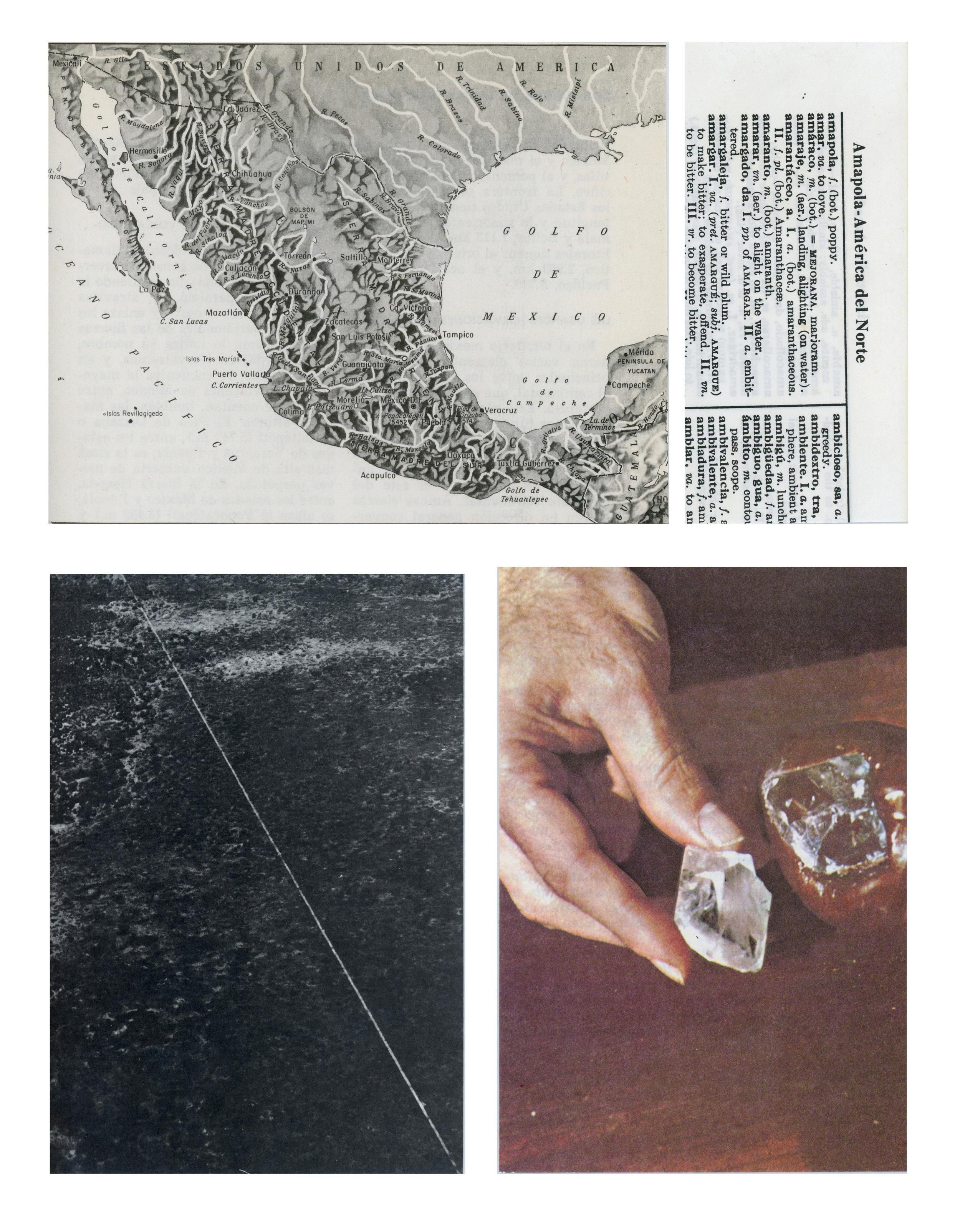 3. amapola-america del norte.jpg