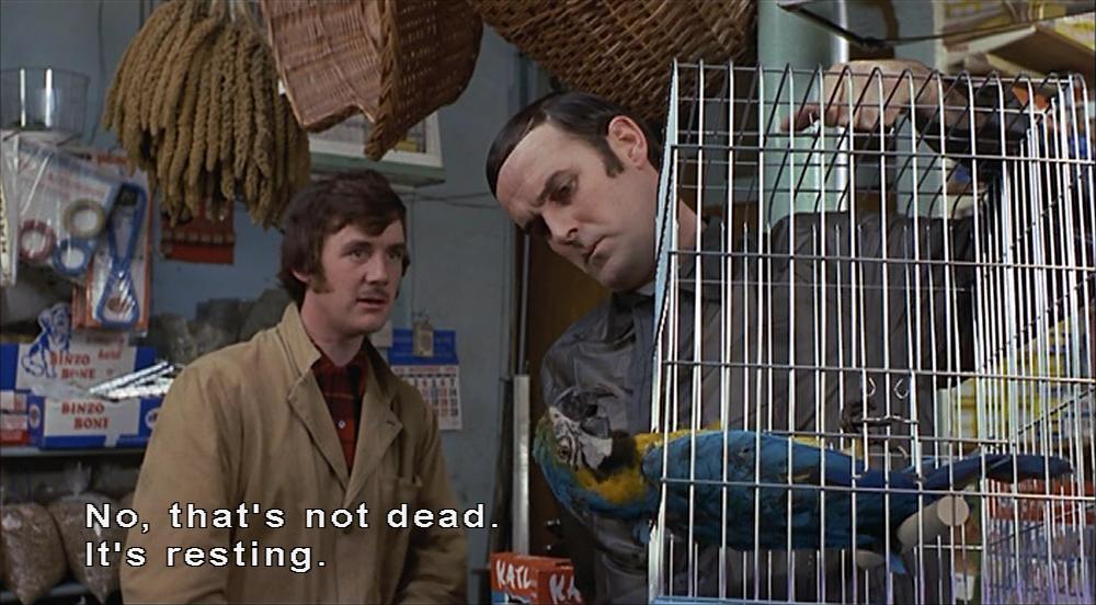 Dead-parrot-2.jpg