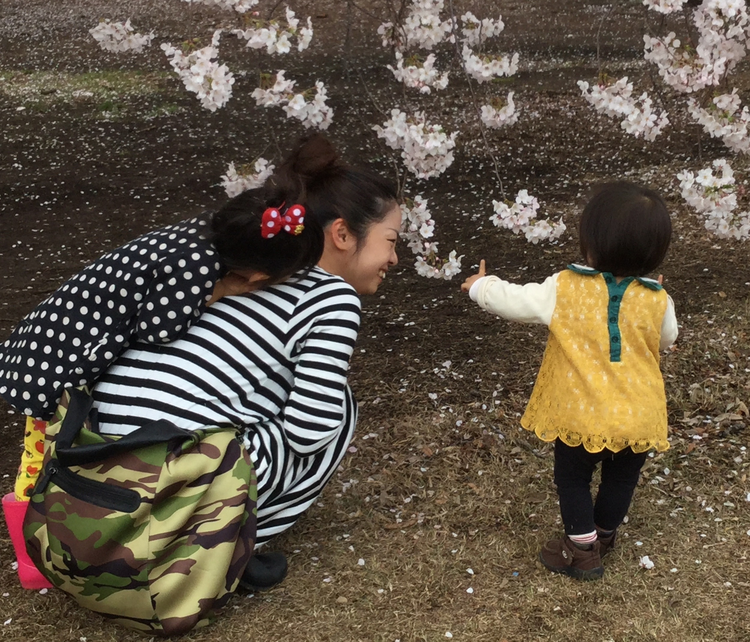 Shinjuku Gyoen National Garden    (新宿御苑)    Shinjuku  ,  Tokyo  ,  .  Photos: Gregg McVicar