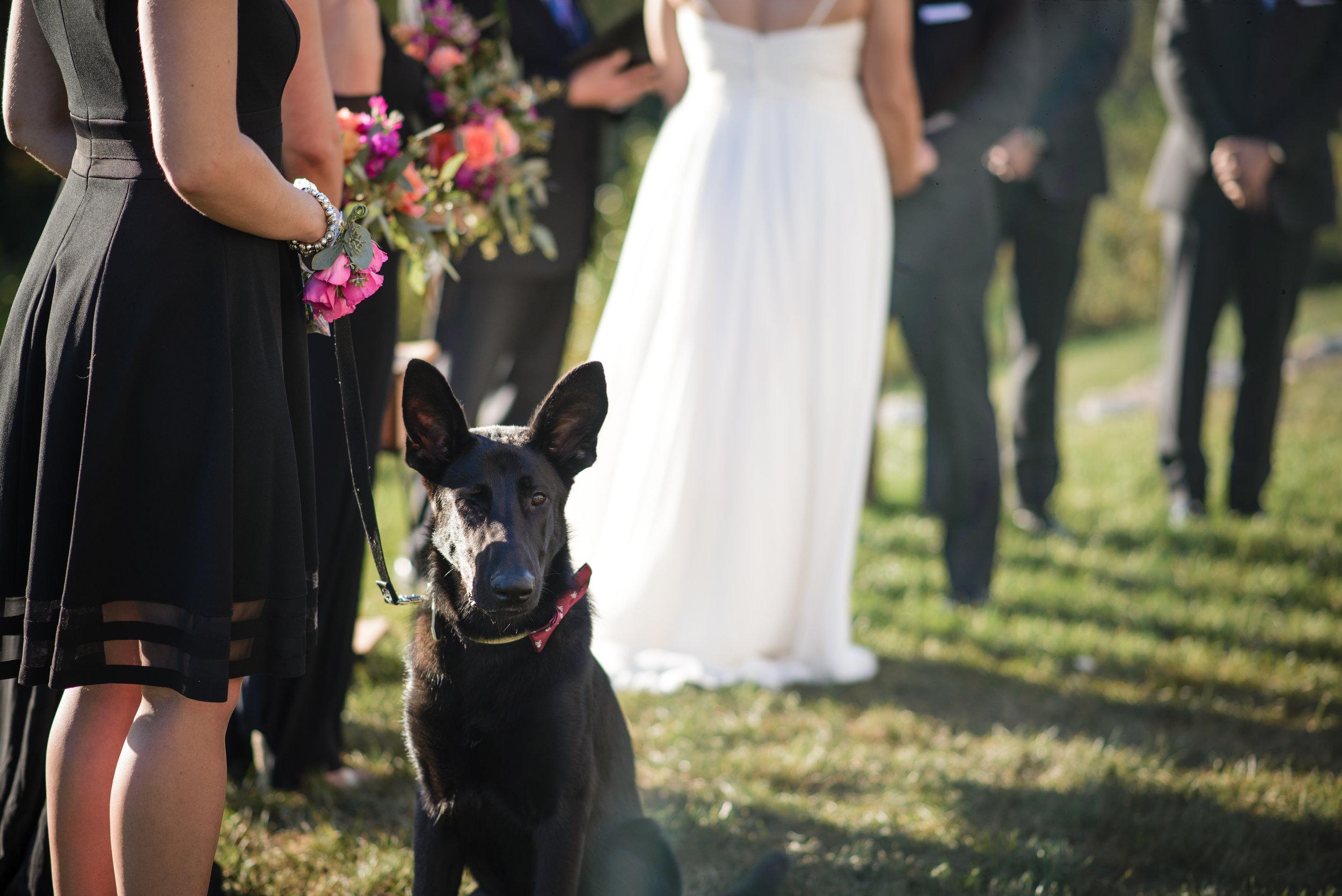 Iron Lakes Country Club Wedding Photographer